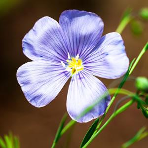 Atlanta Collection linen flower image